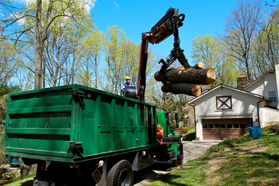 At John B. Ward and Co. our arborists are extensively trained to utilize the latest techniques and equipment for safe and efficient removal of trees when ... & Tree and Shrub Care | John B Ward Co.